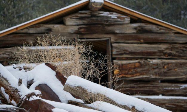 Previene la congelación en tus aves de corral