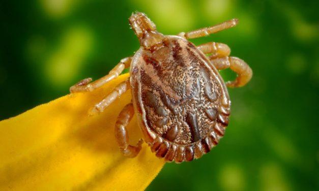 Cómo eliminar parásitos externos en tus gallinas y aves de corral