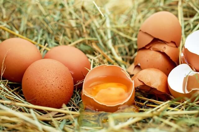 Evita incluir huevos en la alimentación de tus aves de corral.