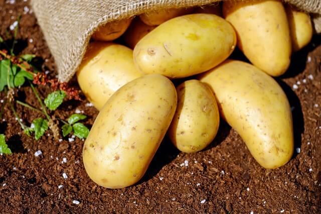 Evita la piel de la patata cruda en la alimentación de tus gallinas y aves de corral.